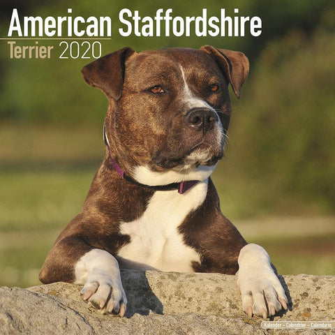 American Staffordshire Terrier 2020 Wall Calendar front Image