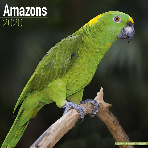 Amazons 2020 Wall Calendar Front Cover