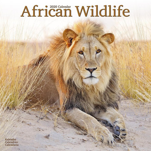 African Wildlife 2020 Wall Calendar Front Cover