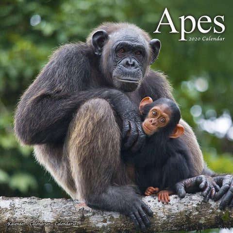 Apes 2020 Wall Calendar Front Cover