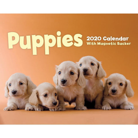 Puppies 2020 Small Box Calendar Front Cover