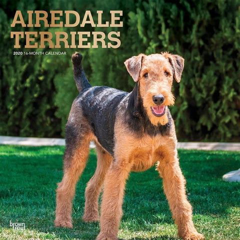 Airedale Terriers 2020 Wall Calendar Front Cover