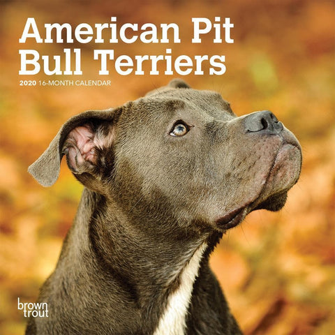 American Pit Bull Terriers 2020 Mini Calendar Front Cover