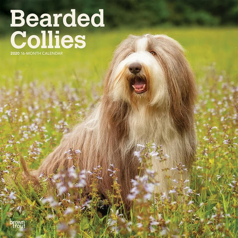 Bearded Collies 2020 Wall Calendar Front Cover