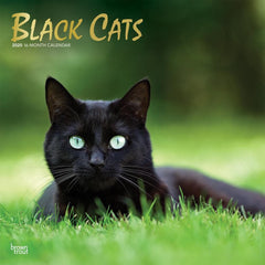 Black Cats 2020 Wall Calendar Front Cover