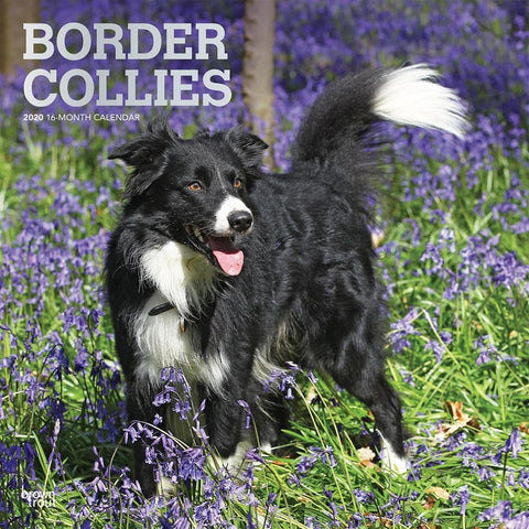 Border Collies 2020 Wall Calendar Front Cover