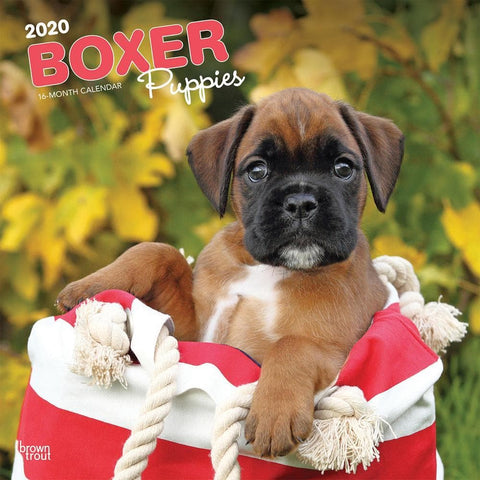 Boxer Puppies 2020 Wall CalendarFront Cover