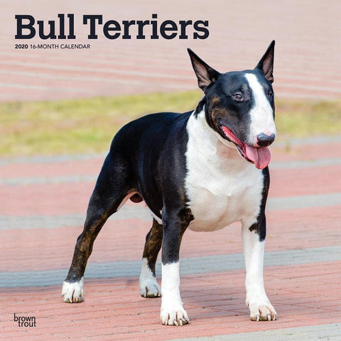 Bull Terriers 2020 Wall Calendar Front Cover