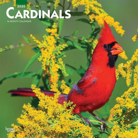Cardinals 2020 Wall Calendar Front Cover