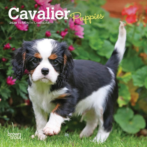 Cavalier King Charles Spaniel Puppies 2020 Mini CalendarFront Cover