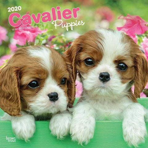 Cavalier King Charles Spaniel Puppies 2020 Wall Calendar Front Cover