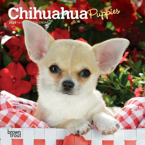Chihuahua Puppies 2020 Mini CalendarFront Cover