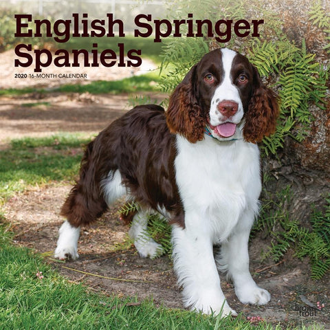 English Springer Spaniels 2020 Wall Calendar Front Cover