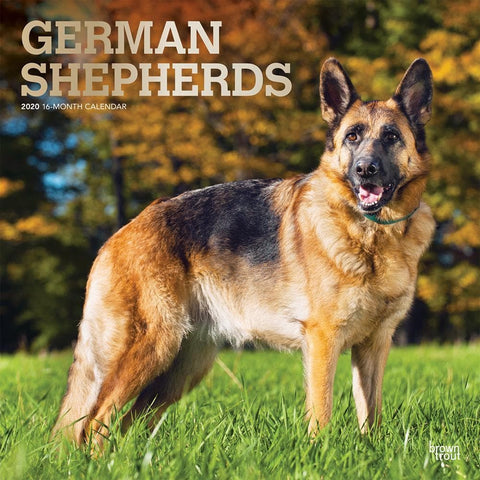 German Shepherds 2020 Wall Calendar Front Cover