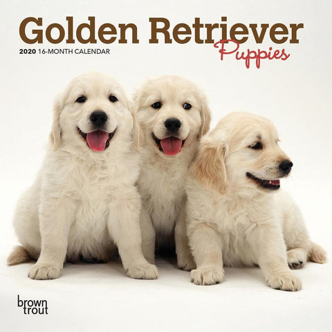 Golden Retriever Puppies 2020 Mini CalendarFront Cover