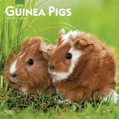 Guinea Pigs 2020 Wall Calendar Front Cover