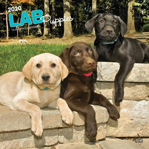 Lab Puppies 2020 Wall Calendar Front Cover