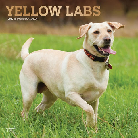 Lab Yellow 2020 Wall Calendar Front Cover