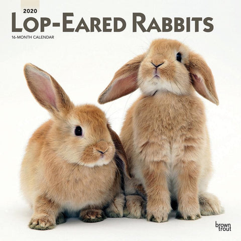 Lop Eared Rabbits 2020 Wall Calendar Front Cover