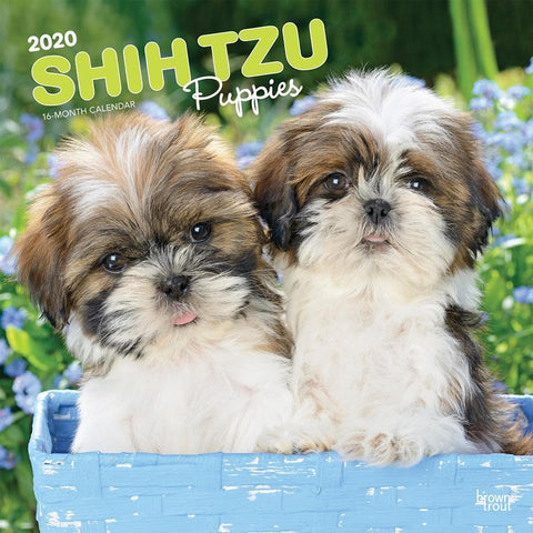 Shih Tzu Puppies 2020 Wall CalendarFront Cover
