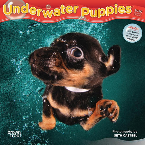Underwater Puppies 2020 Mini Calendar Front Cover