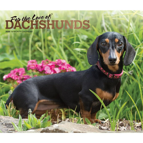 Dachshunds For the Love of Deluxe 2020 Wall Calendar  Front Cover