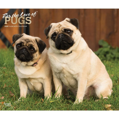 Pugs For the Love of Deluxe 2020 Wall Calendar  Front Cover