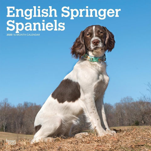 English Springer Spaniels Euro 2020 Wall Calendar Front Cover