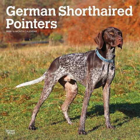 Pointers German Shorthaired Euro 2020 Wall Calendar Front Cover