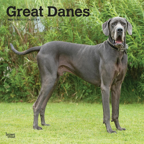 Great Danes Euro 2020 Wall Calendar Front Cover