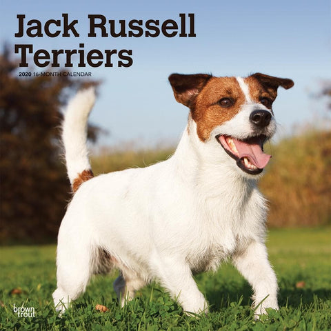 Jack Russell Euro 2020 Wall Calendar Front Cover