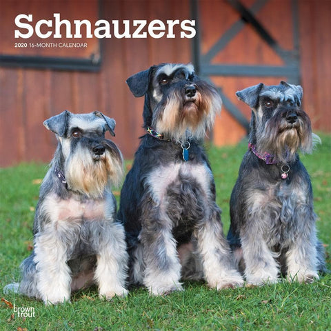 Schnauzers Euro 2020 Wall Calendar Front Cover