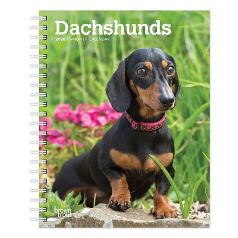 Dachshunds 2020 Engagement Calendar Front Cover