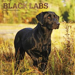 Black Lab 2022 Wall Calendar Product Image