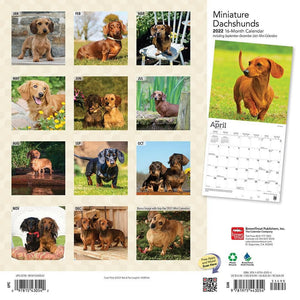 Dachshunds Miniature 2022 Wall Calendar Product Image