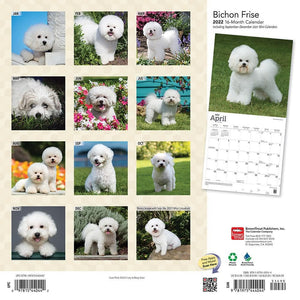 Bichon Frise 2022 Wall Calendar Product Image