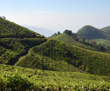 Kerala Tea Plantations and Hills