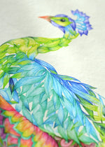 PEACOCK ART PRINT - colourful exotic birds illustration limited edition - Victoria von Stein Design