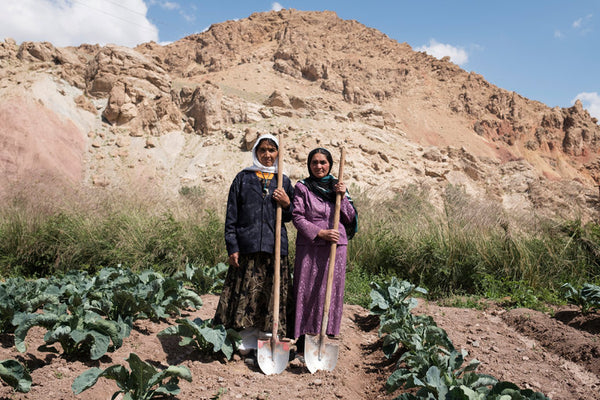 Female farmers in Afghanistan, growing cauliflowers.
