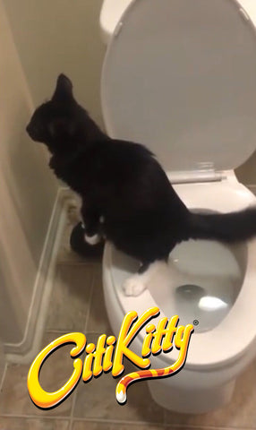 This toilet trained kitty from LA impresses the stars with the abilities
