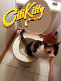 A new toilet trained cat ditches the litter box