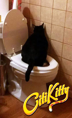 No more litter box, this cat uses the toilet instead with the help of CitiKitty