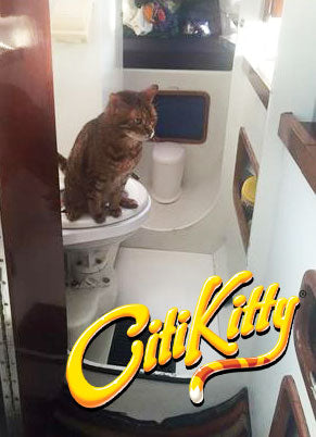 Impressive - this kitty learns to use the toilet on a boat