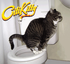CitiKitty Cat Toilet Training Kit with Extra Training Insert - CitiKitty Inc.   - 7