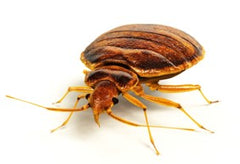 Protect-A-Bed Blog Bed Bugs