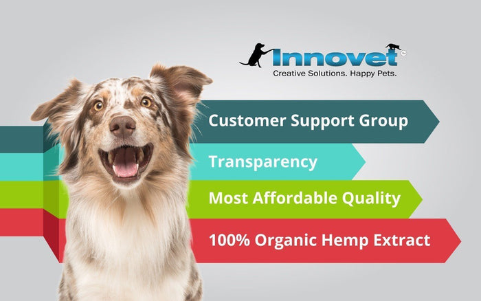 There's A Reason We've Become The Number 1 Pet Hemp Company