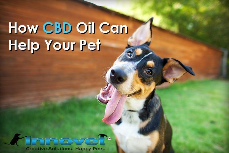 How Hemp Oil Can Help Your Pet