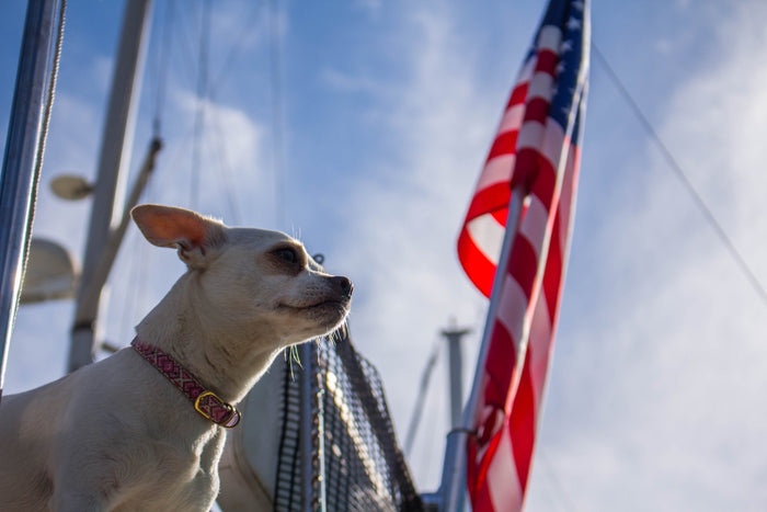 How To Help Your Pet This 4th of July