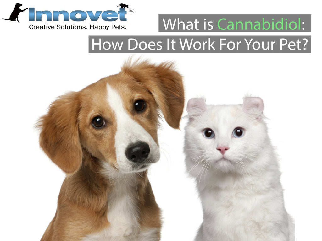 What is Cannabidiol and How Does It Work For Your Pet?