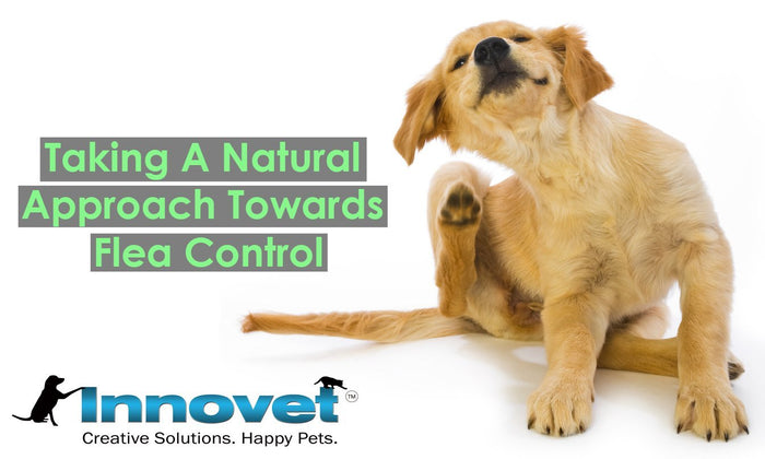 The Benefits of Using Natural Flea Control For Your Pets